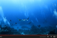 Film: Palau, een paradijs in Micronesië