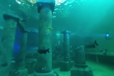 Pierre Gorissen – Duiken bij TODI (360-graden video)