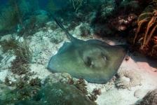 Mirjam van der Sanden – Duiken aan de oostkust van Bonaire