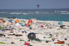 Save our Sharks en WNF maken stranden in Nederland en Caribisch gebied schoon