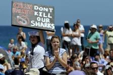 Protest tegen doden haaien