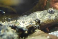 Eerste rivierdonderpaddenhotel geopend