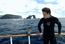 Filmmaker Rob Stewart (Sharkwater) vermist