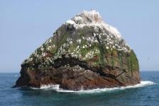 Nieuwe zeedieren ontdekt voor Schotse kust