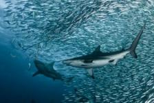 Lef voor schonere oceanen?