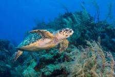 Stans van Hoek – Haaien en schildpadden op Bali