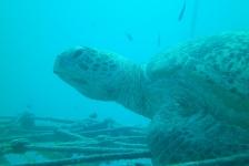 Koen Moons – Lesgeven tussen de schildpadden