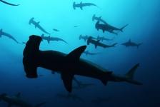 Gratis naar film Sharkwater bij De Ceuvel