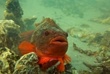 Belgische Duiksportbeurs: Onderwaterfotografie voor beginners