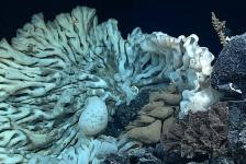 Grootste spons ter wereld ontdekt bij Hawaï