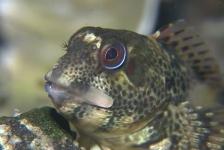 Jeroen Thoolen – Vriendelijke vrolijke visjes