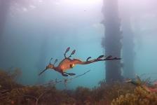 Sverrin Schoonderwoerd – Australia: Blue Ocean