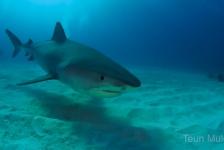 Teun Mulder – Niks met haaien? Schrap Tiger Beach!