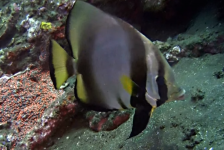 Tim de Haan – Bali duiksafari – Amed & Tulamben