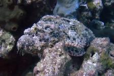 Tim de Haan – Duiken bij de Gili eilanden