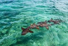 Broedermoord in de haaienwereld