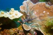 Verschuiving continenten bevordert biodiversiteit in koraalriffen