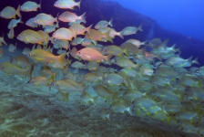 Ronald Faber- Tamarán: een film over duiken in het Arinaga Marine Reservaat