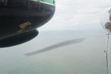 Voorbereidingen in volle gang voor vliegtuigtellingen van walvisachtigen