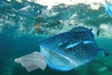 WNF aan VN: kom met verdrag tegen plastic in oceanen