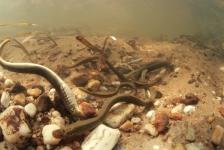 In beeld: Gelderland onder water