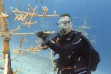 Willem van der Draaij – Reef Renewal