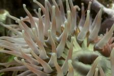 Migratie kleine zeedieren als gevolg van tsunami