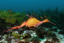 Zeedraakjes naar Sea Life