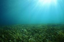 Zeegras tegen opwarming van aarde