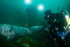 Mirjam van der Sanden – Duiken met een zeehond in Ierland