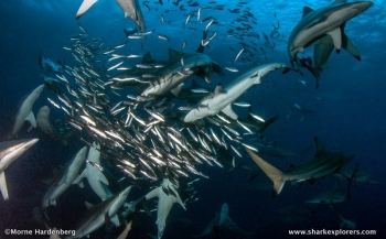 Film: Shark Ball