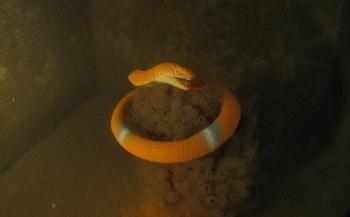 Serpent-foto's bekroond