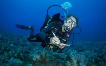 Expeditie Saba Bank 2018 - De tien hoogtepunten van het rif