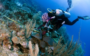 Expeditie Saba Bank 2018 - Er komt een koraaltje bij de dokter