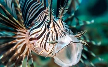 Vissen verdwijnen uit tropische regio's