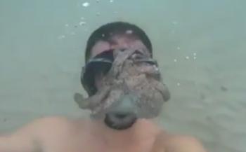 In beeld: Octopus zoekt toenadering...