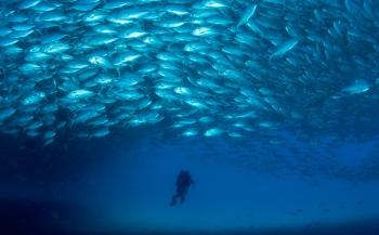 Leendert Smit - De zee van Cortez: grote scholen vis