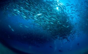 Reportagewedstrijd 2016 - Exploring Baja California