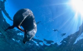 Leendert Smit - Exploring Baja California: zeeleeuwen