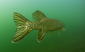 René Weterings - Voorjaarszonnetje onder water
