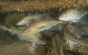 Hoeveel soorten leven er in de Noordzee?