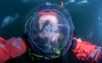 NK Onderwaterfotografie Henny Blokvoort... even kennismaken!