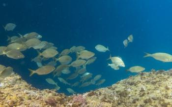 Ad Aleman - Nog een keer onder water bij de Azoren
