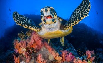 Alex Mustard geeft tips voor beginnende onderwaterfotografen