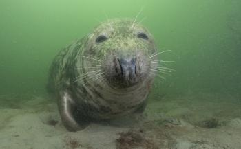 Review - De Groene Zee