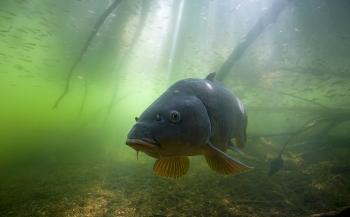 Blik onder water bij Aquashot