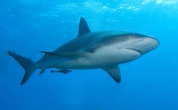 Selfie challenge - I love sharks!