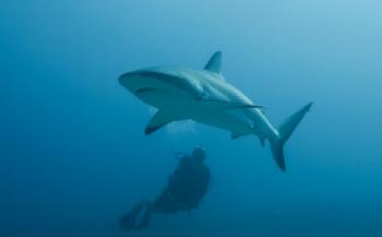Haaientelweekend - We weten steeds meer over onze haaien