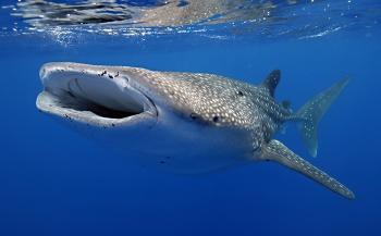 Alléén bij Diving World: ongerept duiken rond goed bereikbaar Christmas Island!