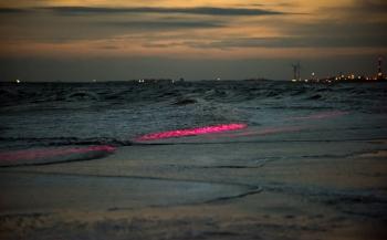 De Noordzee kleurde rood...